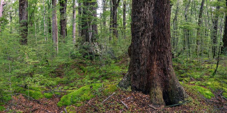 Red Beech Forest 3341 EM.jpg