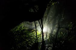 night field work 8712 EM.jpg