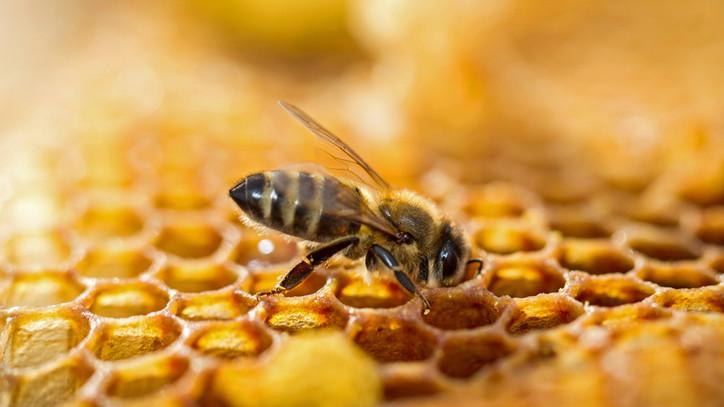 abeilles miel pollen propolis apikulteur