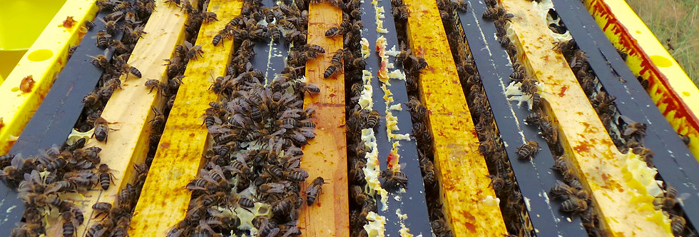 ruche plastique technoset avec essaim abeilles
