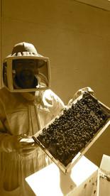 Ruches peuplees avec essaims abeilles L'apiKulter