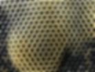 vente essaim d'abeilles noires France Landes Pays Basque