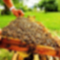 L'apiKulteur Prix essaim abeilles dans leDoubs