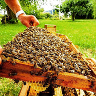 L'apiKulteur Prix essaim abeilles dans leJura