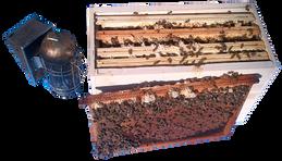 L'apiKulteur assure la Livraison en france et en Mayenne d' essaims d'abeilles en Langstroth ou Dadant.