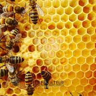 L'apiKulteur Prix essaim abeilles