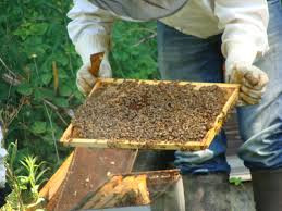 achat essaim d abeilles particulier