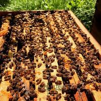 Prix essaim abeilles dans leJura L'apiKulteur