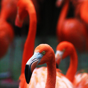 The Flamingo Must Go