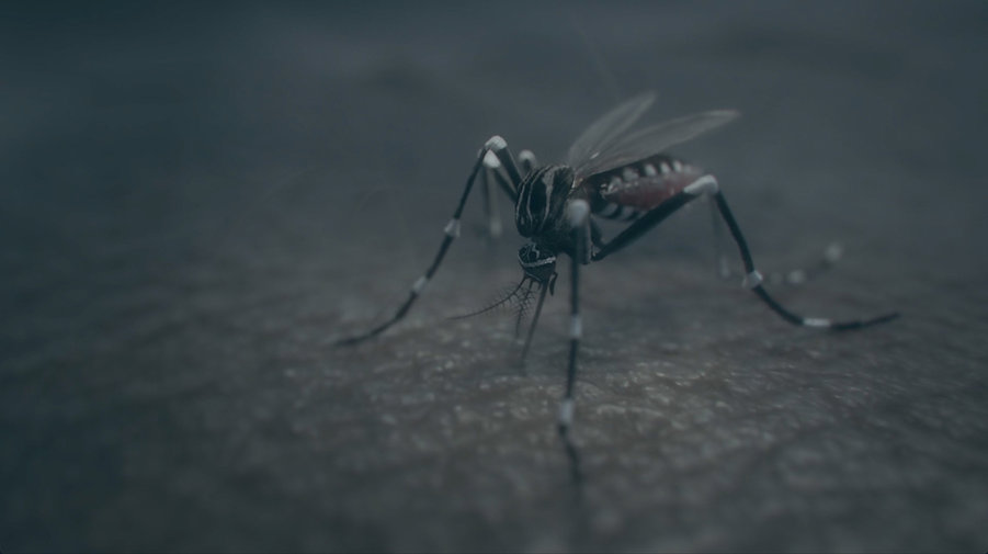 PNM-Aedes-Egyptie-still-3 (1).jpg