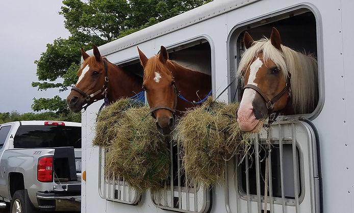 horses%20in%20trailer_edited.jpg