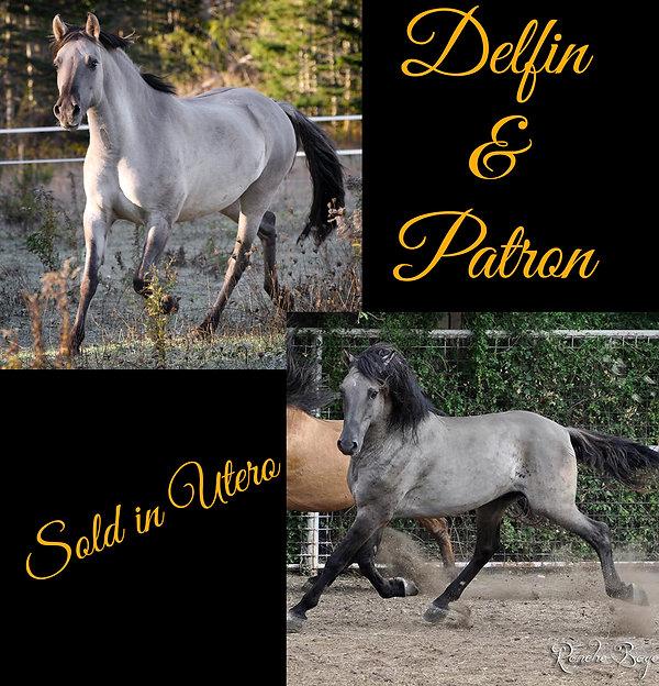 Delfin & Patron.jpg