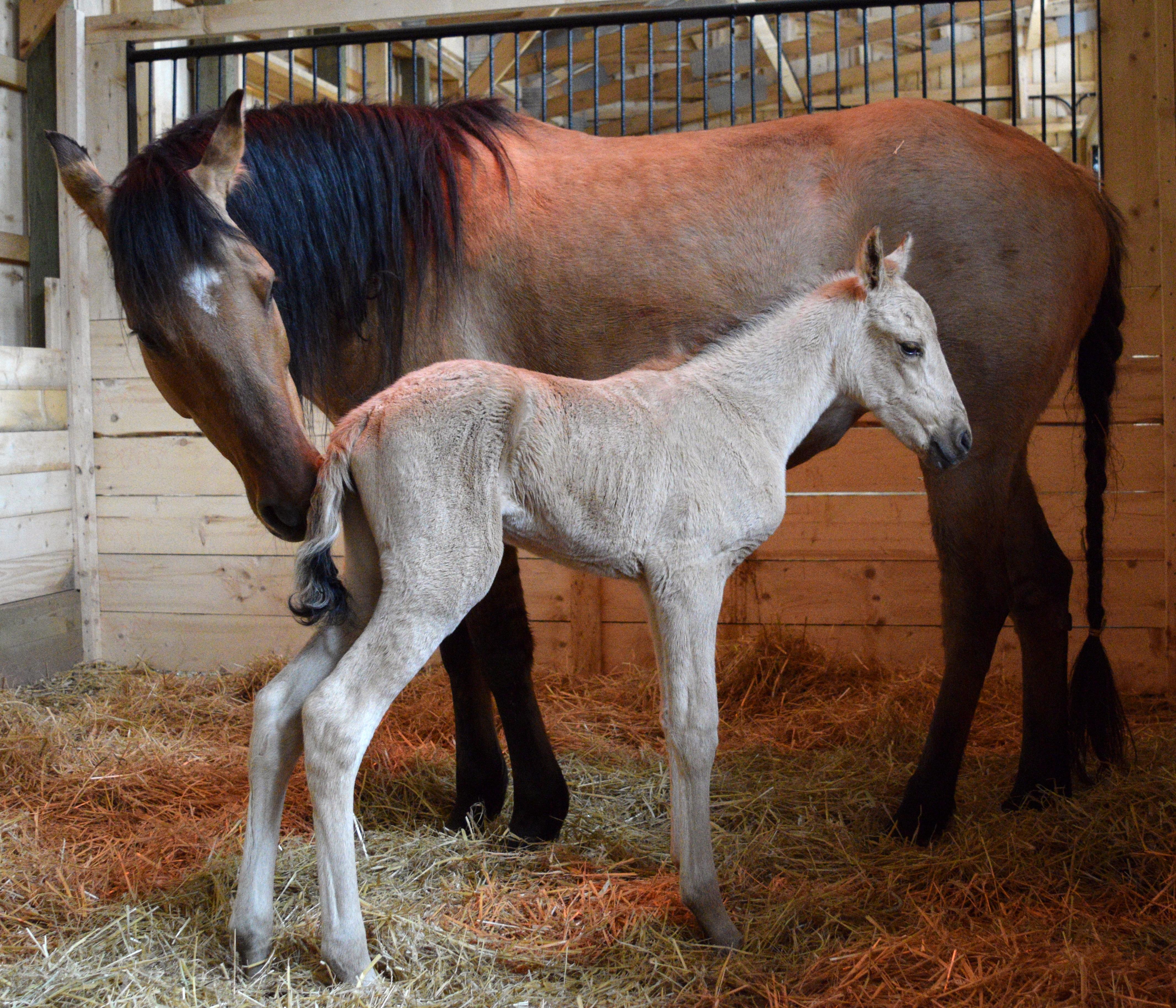 foal 059