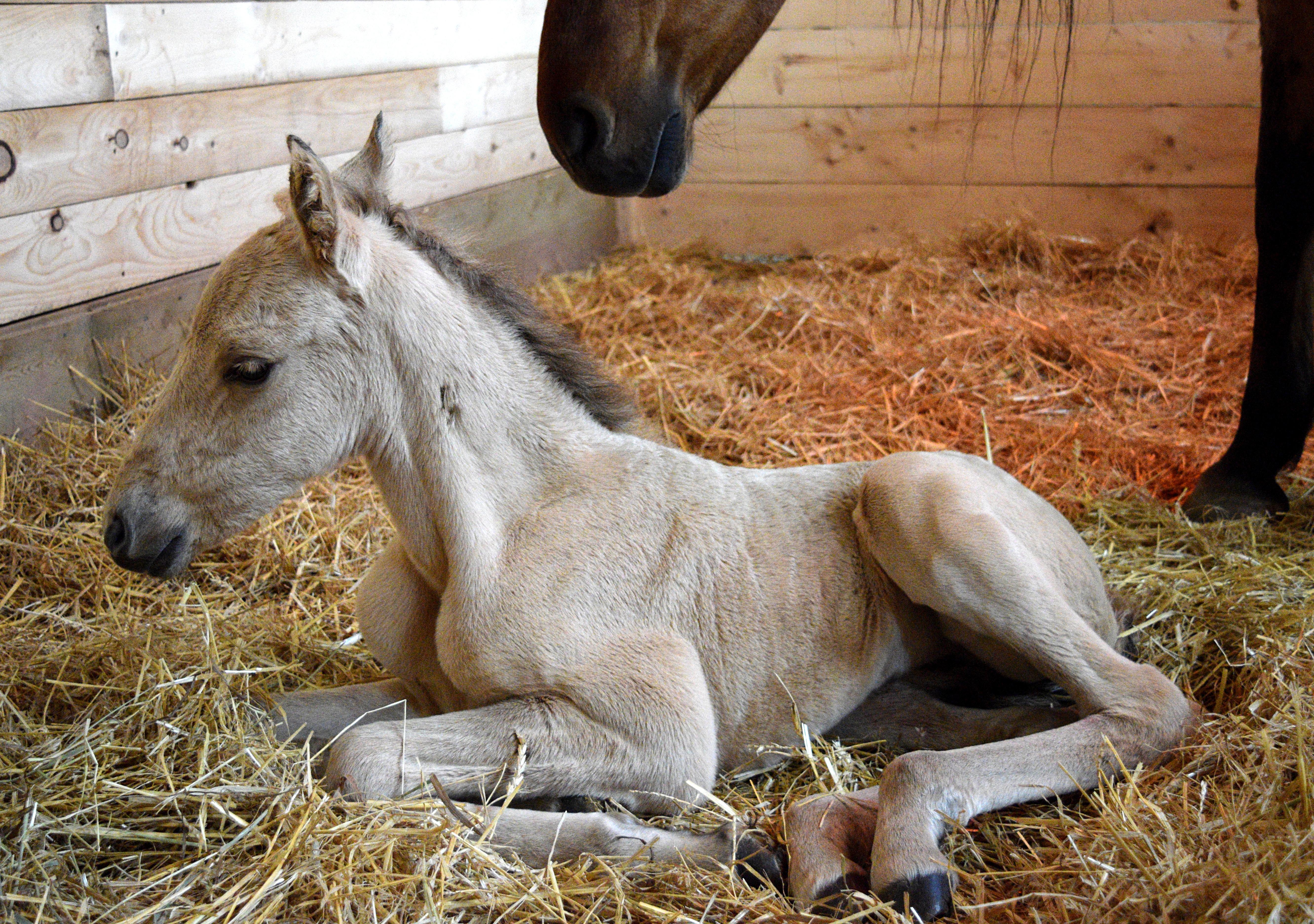 foal 023