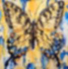 Tiger Swallowtail3.jpeg