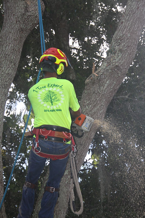 tree service merritt island fl