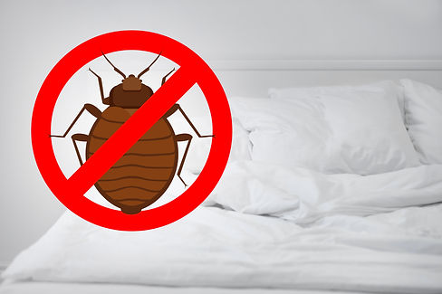 bed bug heat treatment for Houston