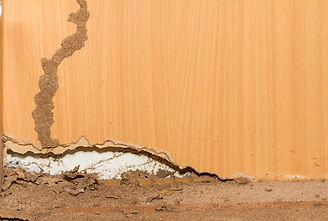 Texas Pest Control For Termites