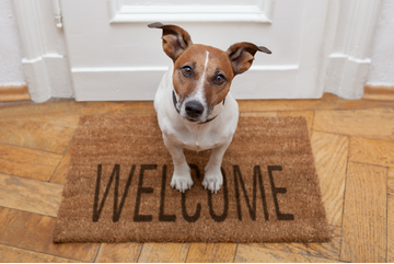 Landlords- Setting Policies for Tenants` Dogs
