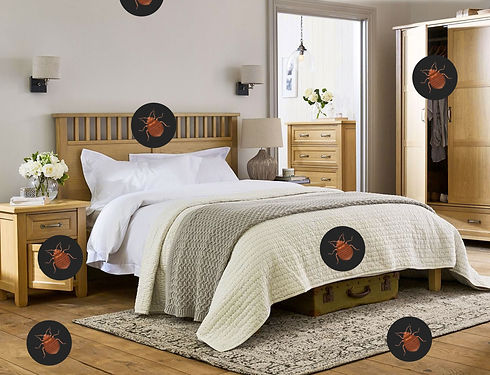 houston bed bug heat treatment