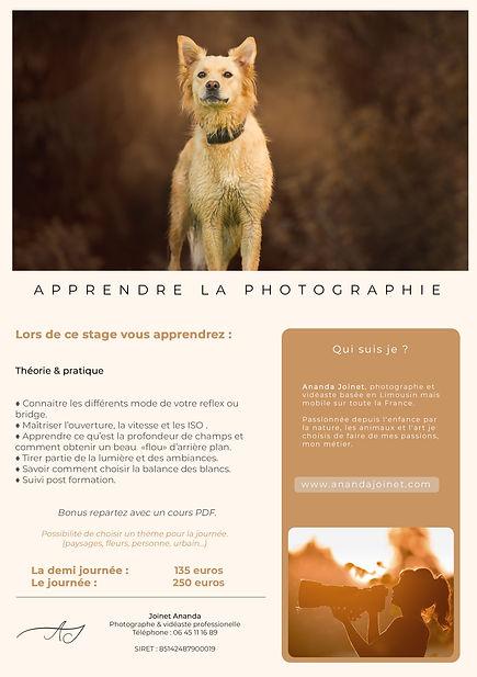 workshop chien.jpg