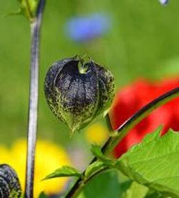vivid photo herb garden Coton manor.jpg