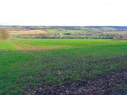 Open grass land