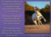 horse2_orig.png