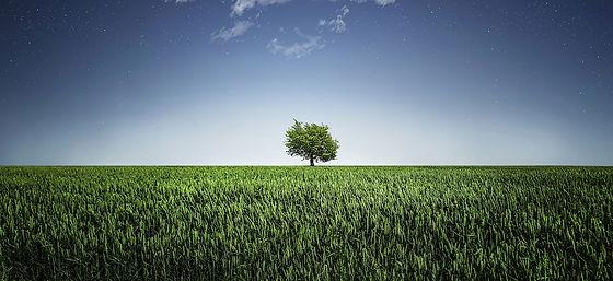 Soil Managment Trees.jpg