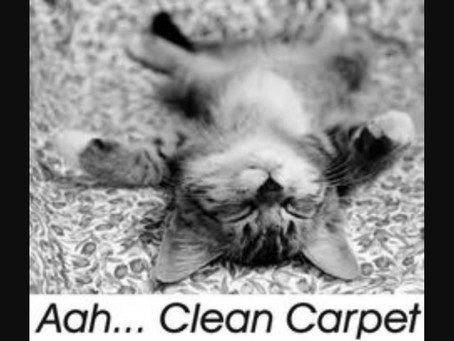 Sometimes we all just want to lay on clean carpet!!!