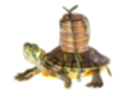 Funny turtle carrying a stack of money s
