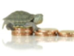 Turtle on money. Slowly concept.jpg
