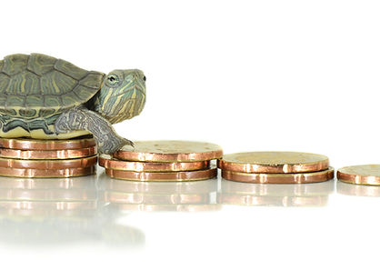 Turtle on money. Slowly concept.jpg