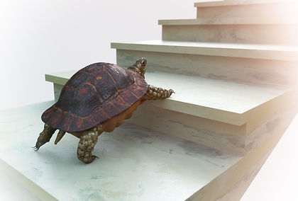 moving turtle wants to climb on the stai
