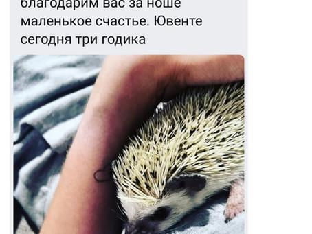 Приятные моменты)