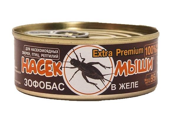 корм для африканских карликовых ежей, кормовые насекомые, консервы для насекомоядных животных