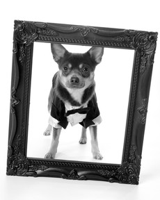 Pet photography @ Photos with Sarah
