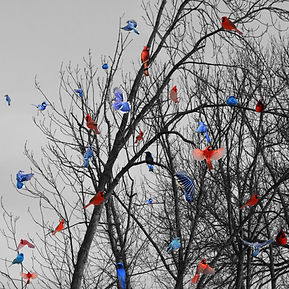 19Birds rouge & bleu.jpg