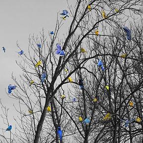 19Bird bleu & jaune.jpg
