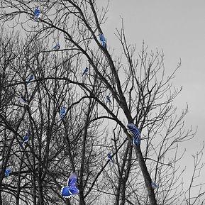 oiseaux+bleushtml.jpg