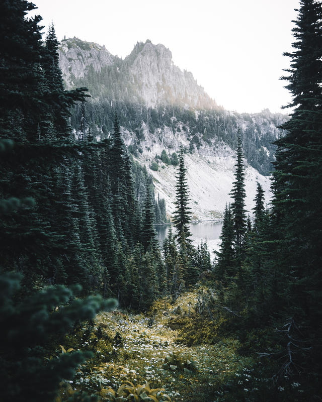 Tolmie Peak (6).jpg