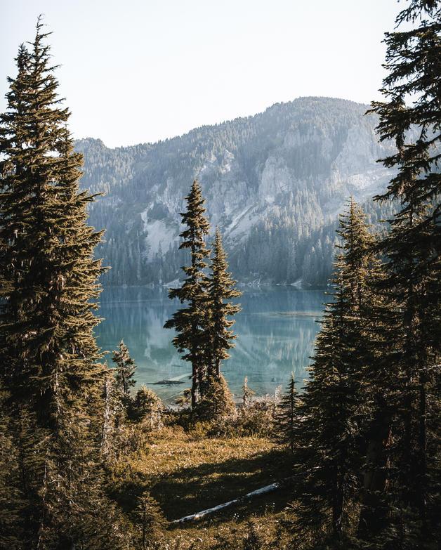 Tolmie Peak (30).jpg