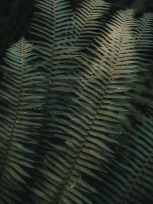 Sol Duc Falls (1).jpg
