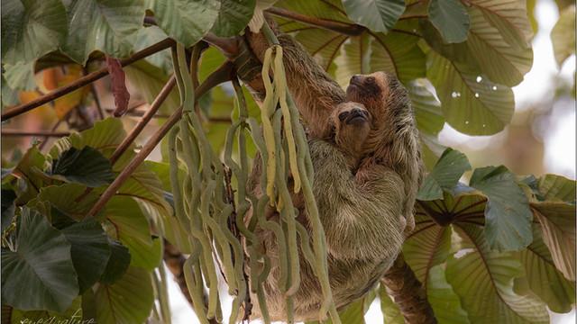 Pura Vida or simply welcome to Costa Rica