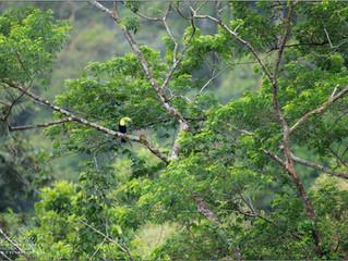 Pura Vida - or Welcome to Costa Rica