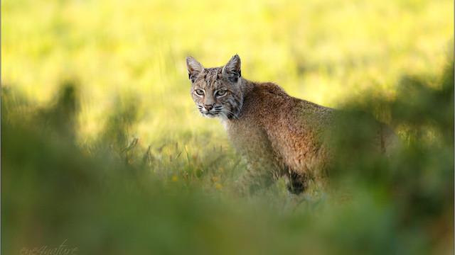 California - Wildlife