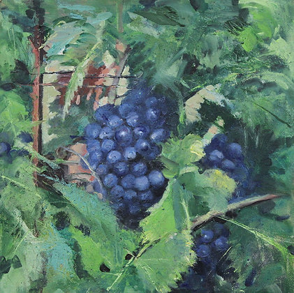 Vineyard #5