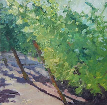 Vineyard #1