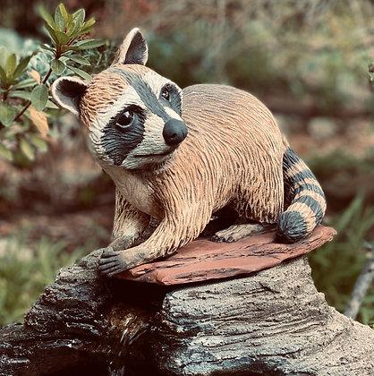 Corona Raccoon
