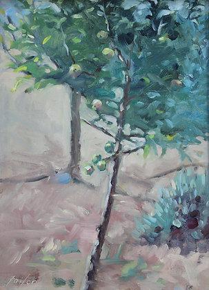 Apple Tree #1